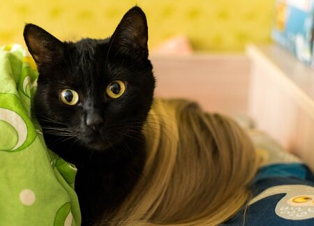 A black cat lies on the girls head. The treating properties of a cat.