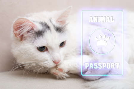 Animal, cat passport. Documents for animals, veterinary passport concept. White cat with a passport.