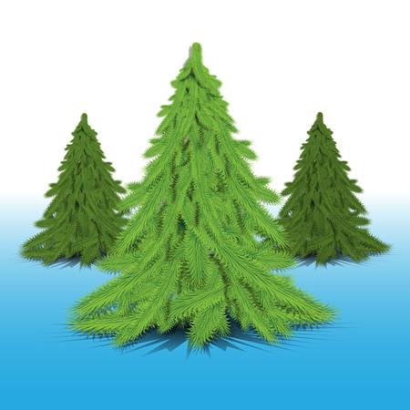firtrees: green fir-trees on a blue background