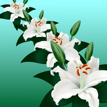 stamen: white lilies on a green background