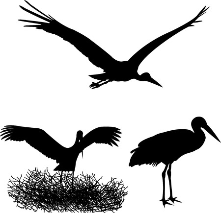 black stork: stork silhouettes - vector Illustration