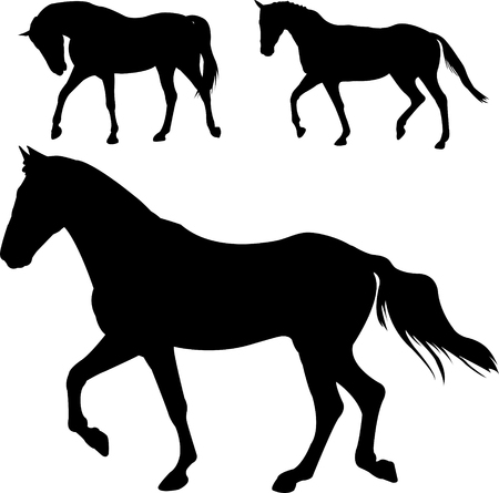 horse riding: chevaux silhouettes - vector