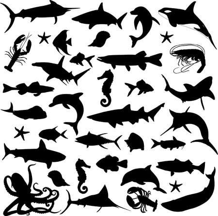 sheat fish: sea world - vector Illustration