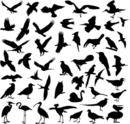 big collection of birds - vector Vector