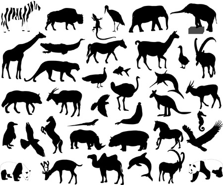 animals collection - vector Vector