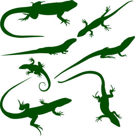 art: lizards collection - vector