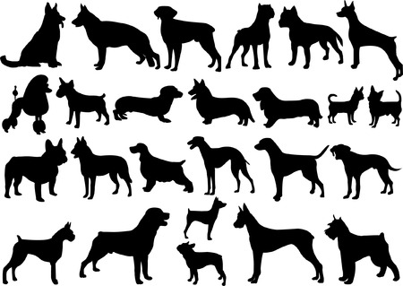 dogs collection - vector Vector