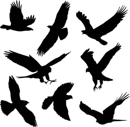 eagles and falcons - vector