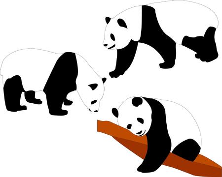 panda bears - vector