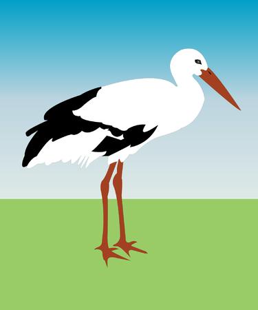 wader: illustration of stork - vector Illustration