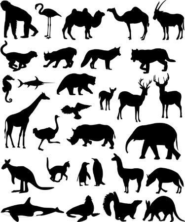 zorros: recogida de animales siluetas - vector Vectores