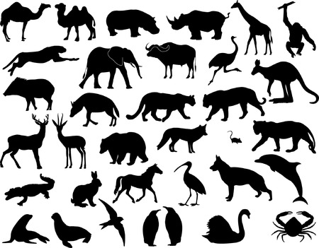 animals collection vector Vector