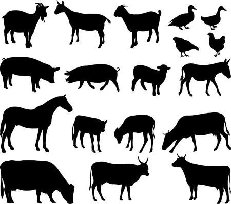cabras: los animales de granja - vector Vectores