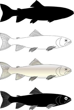 민물의: trout fish - vector