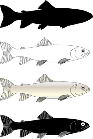 outline fish: trout fish - vector