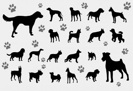 beagle puppy: perros  Vectores