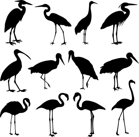storks, cranes and flamingos silhouettes  Vector