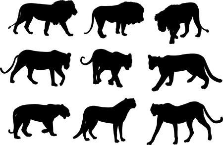Wilde Katzen  Standard-Bild - 7461572