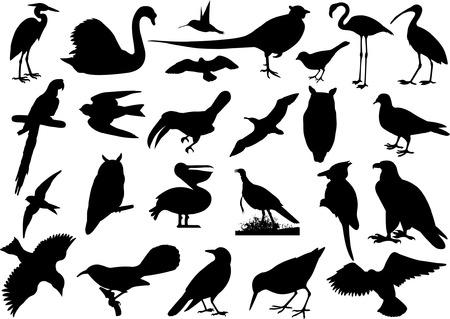 Birds silhouettes collection Vector