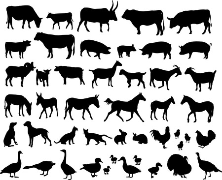new big collection of farm animals   Vector