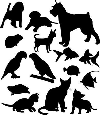 świnka morska: zwierzÄ™ta domowe silhouettes kolekcji  Ilustracja
