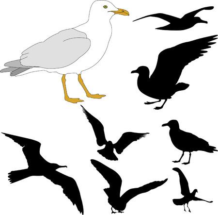 m�ve: Seagulls - Vektor