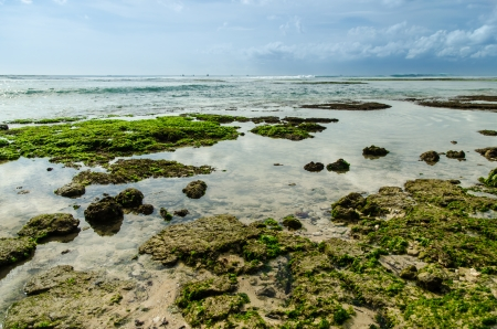 seaweeds: Seaweeds at Bali Beach Stock Photo