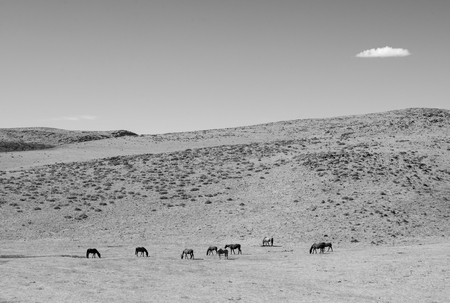 Horses in the Dry Desert in Nevada