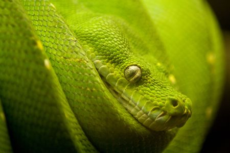 sliding scale: a green snake on the hunt Stock Photo