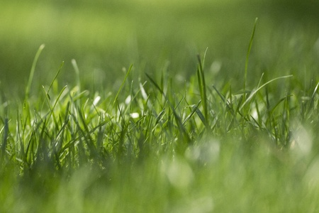 Green grass with selective focus