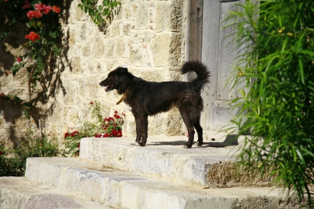 Cute black dog in front of mediterranean style wooden door