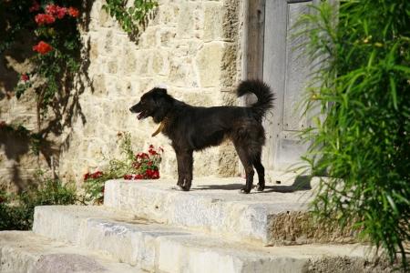 barn door: Cute black dog in front of mediterranean style wooden door