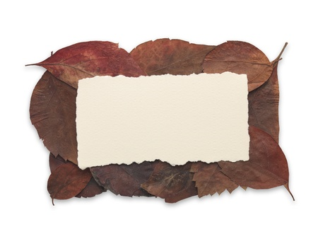 Orange and brown autumn leaves frame on white background