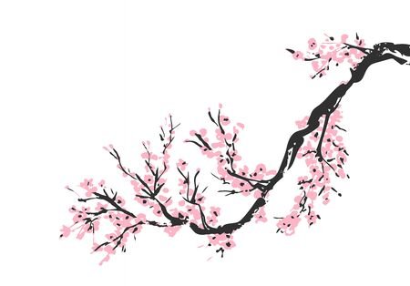 Cherry blossom hand drawn branch with pink cherry flowers blooming.  Sakura blossoming twig isolated on white.  Chinese or Japanese traditional drawing. Vector. Çizim