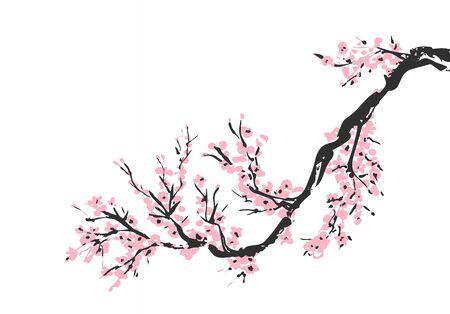 Ramo disegnato a mano di fiori di ciliegio con fiori di ciliegio rosa in fiore. Ramoscello sbocciante di Sakura isolato su bianco. Disegno tradizionale cinese o giapponese. Vettore.