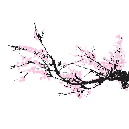 Cherry blossom hand drawn branch with pink cherry flowers blooming.  Sakura blossoming twig isolated on white.  Chinese or Japanese traditional drawing. Vector. Illustration