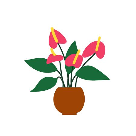 House plant drawing. Potted anthurium isolated on white. Flamingo flower illustration. Hand drawn flat cartoon design. Isolated on white. Vector