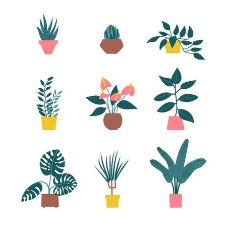 Zimmerpflanze in Töpfen. Grünes natürliches Dekor für Zuhause, Büro und Interieur. Saftige Vektor-Illustration. . Handzeichnung. Satz von Haus Zimmerpflanze Vektor-Cartoon-Doodle.