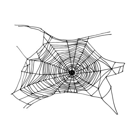 Spider web drawing. Halloween symbol. Isolated on white. Vector illustration. Realistic sketch.  イラスト・ベクター素材