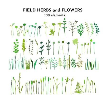 Field plants bundle. Meadow flowers set. Grass and weed collection. Branches and twig. Botanical drawing. Vector hand drawn silhouettes isolated on white. Ilustracja