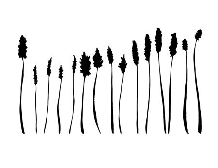 Spikelet silhouette set. Wild grass collection. Hand drawing of meadow herbs or field plants. Black contour isolated on white. Vector sketch illustration. Ilustracja