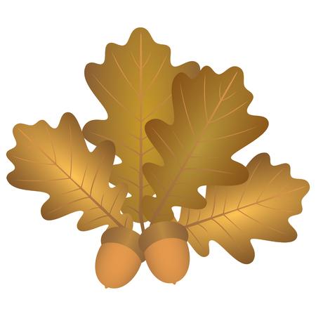 hojas de roble y bellotas. Ilustración. hojas de colores marrón roble del otoño y dos bellotas marrones. Ilustración de vector