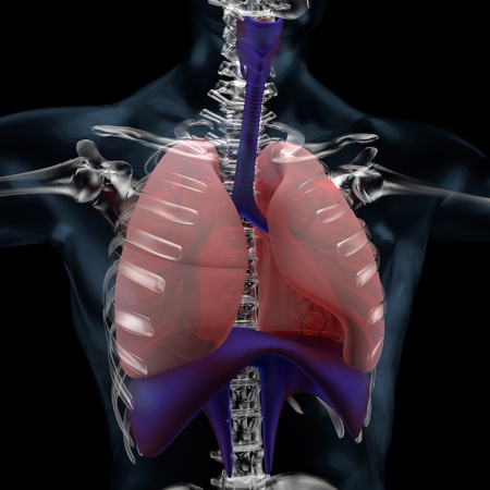 3D illustration of Lungs, respiratory system medical concept Standard-Bild - 125232349