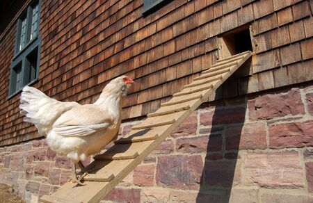 Chicken ramp 写真素材