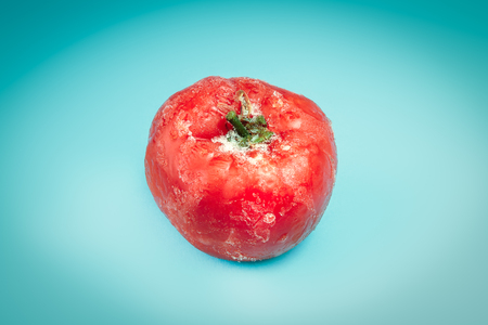 crystallize: Single frozen tomato with frost on light blue background