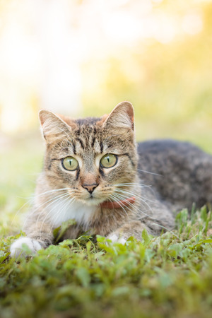 curiously: Cat laying in grass, looking curiously. Plenty of copy space Stock Photo