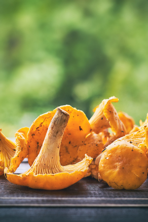 Freshly picked chanterelle mushrooms on wooden table against green blurry background. Plenty of copy space