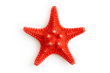 Dried red sea starfish isolated on white background. Top view