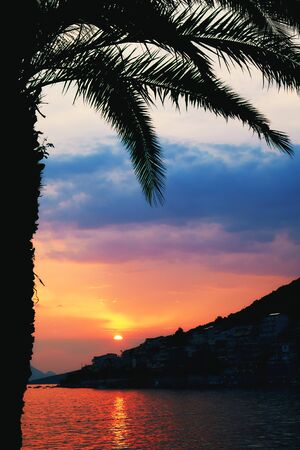 Palm tree silhouette on beach during beautiful sunset 免版税图像
