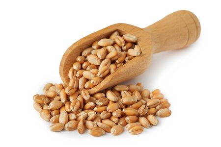 Raw wheat grain in wooden scoop isolated on white background 免版税图像
